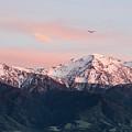 Dawn Flight by M M Rainey