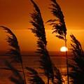 Dawn Grasses by Rrrose Pix
