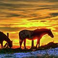 Dawn Horses by Fiskr Larsen