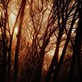 Dawn In The Trees by Sean Dorazio