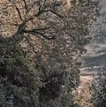 Dawn Montepulciano by Ricardo Baez-duarte