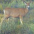 Dawn Names The Deer by Lenore Senior