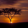 Dawn On The Masai Mara by Sandra Bronstein
