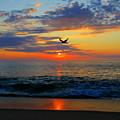 Dawning Flight by Dianne Cowen