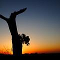 Dawn's Glory by Charley Starnes