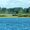 Day At The Wetlands by Linda Kerkau