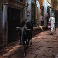 Day In Varanasi by Fadhel Almutaghawi