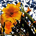 Day Lilies In  Space by David Frederick