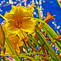 Day Lilies In The Sky With Diamonds  by David Frederick