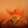 Day Lily Emerging by Terry Davis