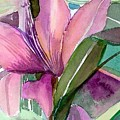 Day Lily Pink by Mindy Newman