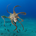 Day Octopus by Dave Fleetham - Printscapes