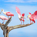 Day Of The Spoonbill  by Mark Andrew Thomas