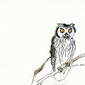 Day Owl by Keith Furness