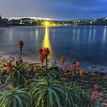 Daybreak And Cloudy Seascape And Aloe Vera by Merrillie Redden