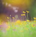 Daydreams by Lyssa Peace