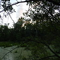 Daylight In The Swamp by Dennis Leatherman