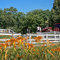 Daylilies And Oxen Wagon by Wayne Reynolds