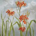Daylilies by Shari Jones