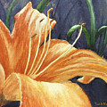Daylily by Todd A Blanchard