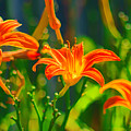 Daylily Trio by Joe Geraci