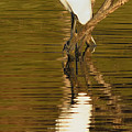 Days End With One Egret by Doug Holck