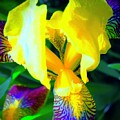 Dazzle In The Garden Sun by Tim G Ross
