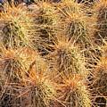 Dbg Cactus II by Julie Parisi