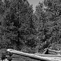Ddp Djd B And W 1880's Cabin Ruins In Montana 3 by David Drew