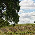 De Vines by Patricia Stalter