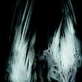 Dead Bird Grey by Grebo Gray