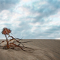 Dead Bush In Sea Sand St Lucia by Ronel Broderick