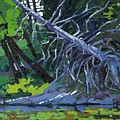 Dead Cedar by Phil Chadwick