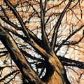 Dead Elm by John Terwilliger
