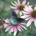 Dead Flower by Bob Guthridge