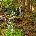 Dead Horse Creek by Murray Pellowe