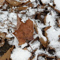 Dead Leaves In The Snow by Alice Markham