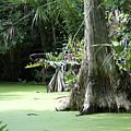 Wild Florida Dead Mans River by Deb Bailey