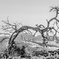Dead Old Tree Near Monument Valley Arizona by Alex Grichenko