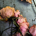 Dead Roses 3 by Kathi Shotwell