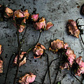 Dead Roses 5 by Kathi Shotwell