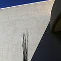 Dead Saguaro Building And Shadows by Mary Bedy