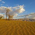 Dead Tree In The Desert  by Alon Meir