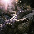 Dead Tree by Robert Minkler