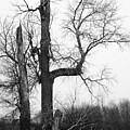 Dead Tree Ten Mile Creek by Dutch Bieber