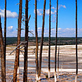 Dead Trees Standing In Hot Springs Within Yellowstone National P by Thomas Baker