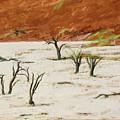 Dead Vlei Namibia by Liz Leyden