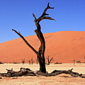 Dead Vlei Tree  by Aidan Moran