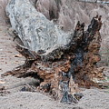 Dead Wood In Color by Rob Hans