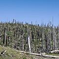 Dead Wood by Kelley King
